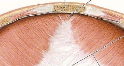 Partes del diafragma