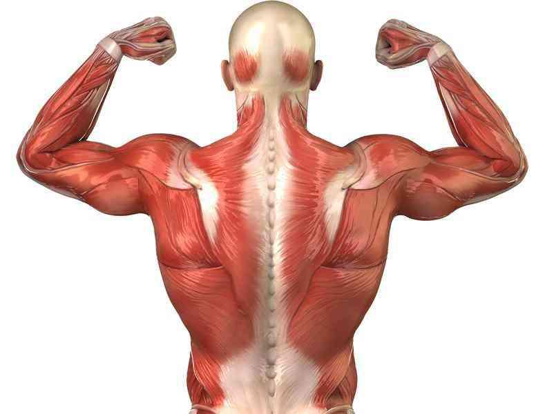 Ansiedad dolor de espalda