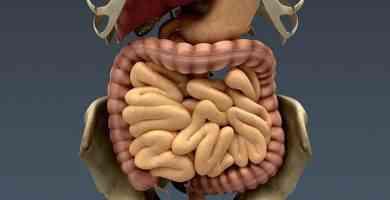 Parte del aparato digestivo
