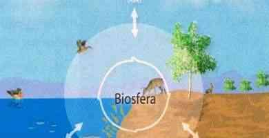 Partes de la biosfera