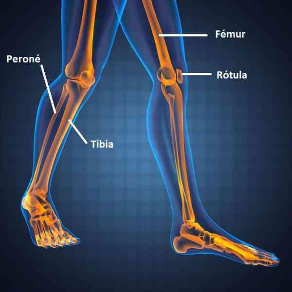 Partes de la pierna