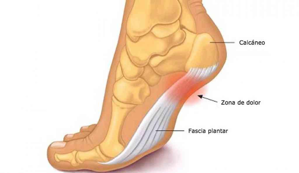 Partes del pie