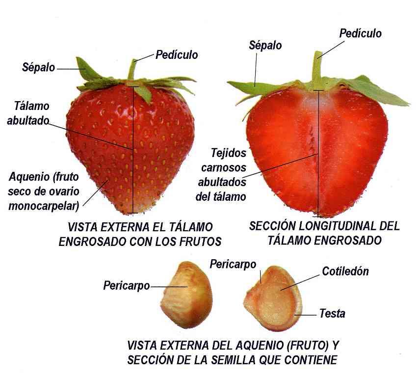 Parte de la fresa