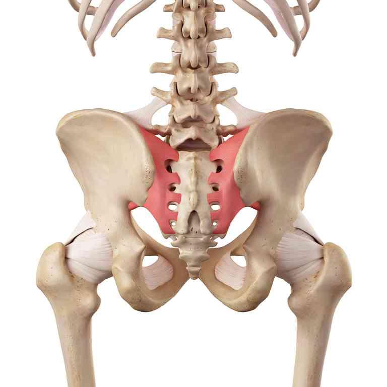 Partes de la pelvis