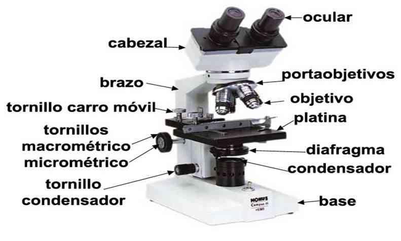 Partes del microscopio óptico